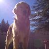 Murphy soaking up the sun