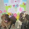 Seadog and Roxy posing with the Easter poster