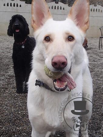 Doggy Daycare - February 2014