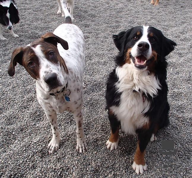 Zeus and Dalila