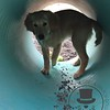 Rufus playing in the tunnel
