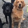 Kya and Rusty