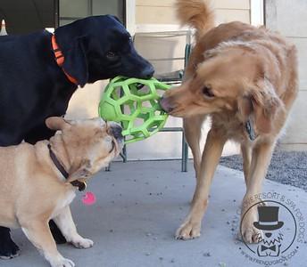 Doggy Daycare - July 2014