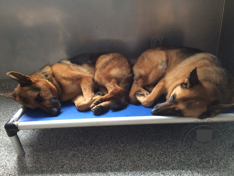 Nap Time at Daycare