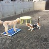 Gus and Rilie playing!