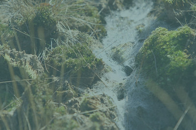 2013-10-06_4745-groenzweem