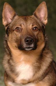 Portretfoto boek Hersengymnastiek voor honden 2006