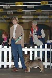 Tentoonstelling Bleiswijk 2004, Groepskeuring