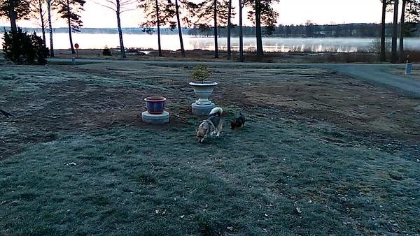 Video vroege ochtend