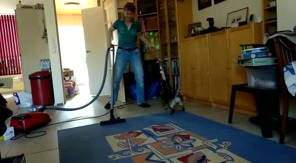 Uitdaging: stofzuigen met een pup