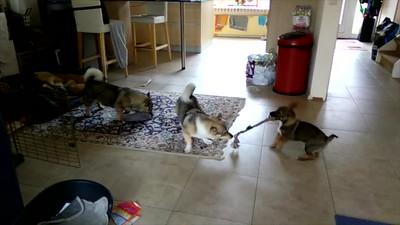 Video Iggy, Yuno en Ronja spel 20 mei 20 19