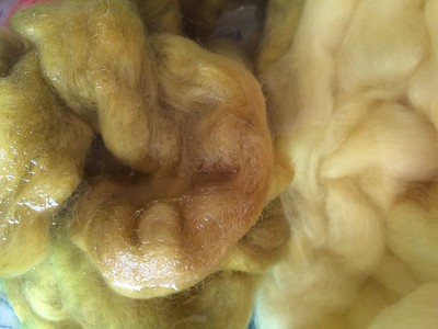 In het beitsbad wordt de blanke wol al een beetje geel (de geelste is met Guldenroede geverfd).