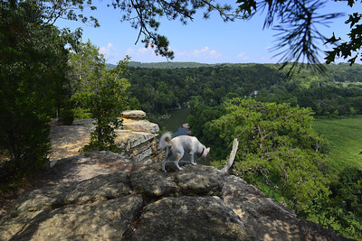 Bluff Over the Harpeth River
