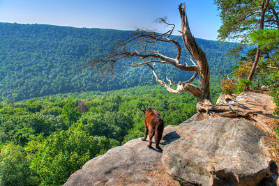 Stone Door Overlook in the Savage Gulf State Natural Area in Tennessee & TransportToNature Photo Keywords: scenic overlook hiking