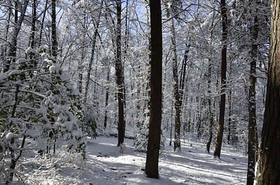 Savage Gulf State Natural Area in Tennessee in Winter