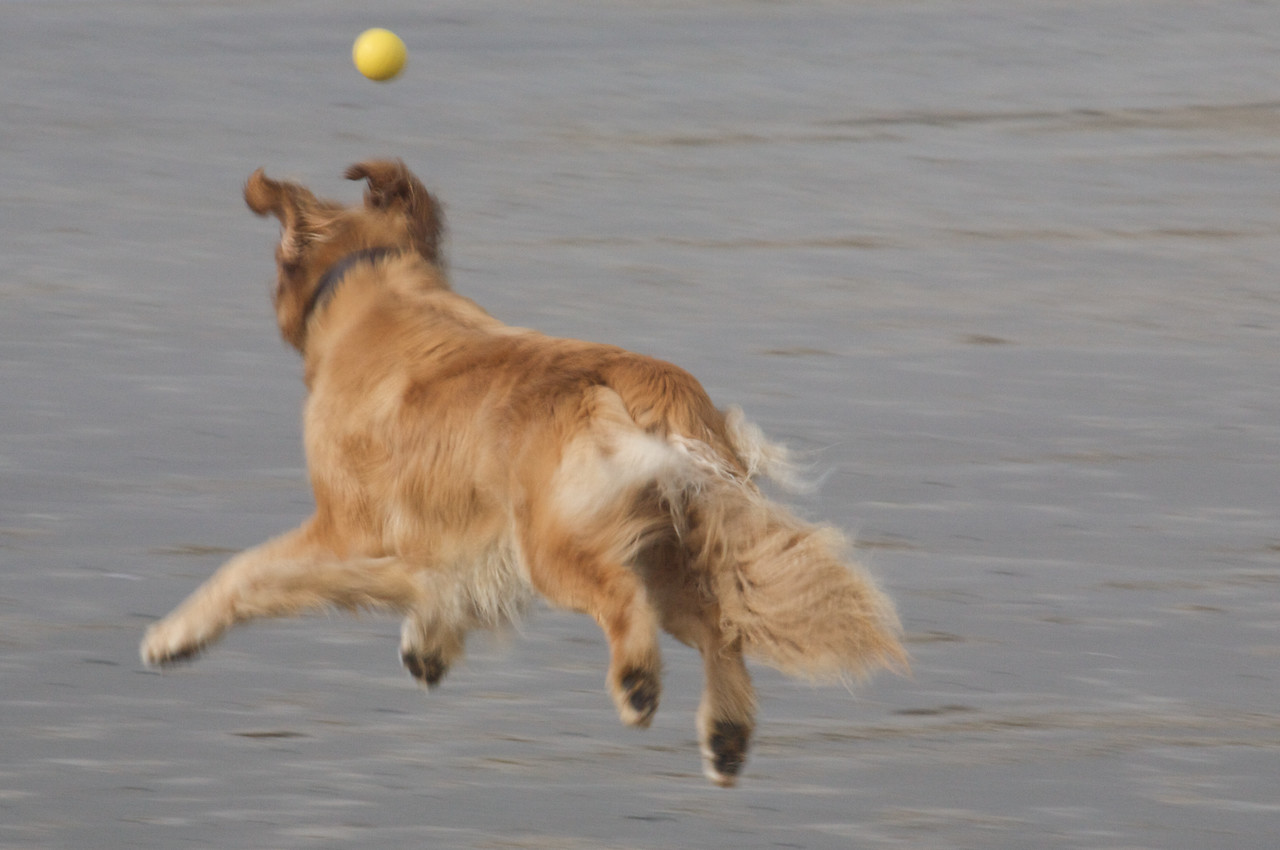 Parker leaps!