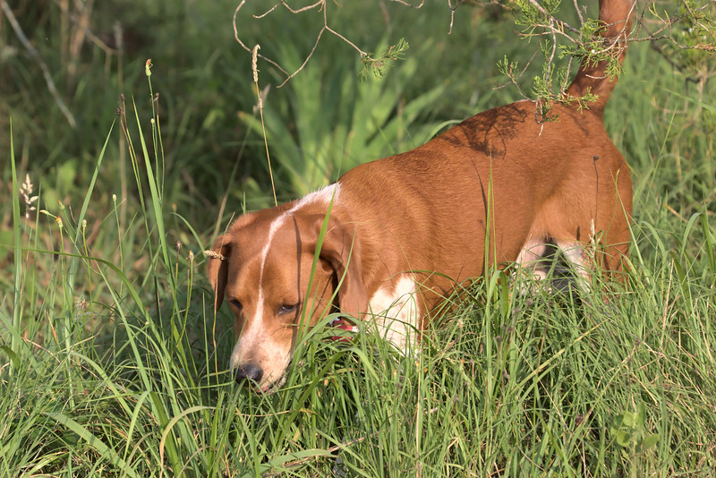 Bader in the tall grass