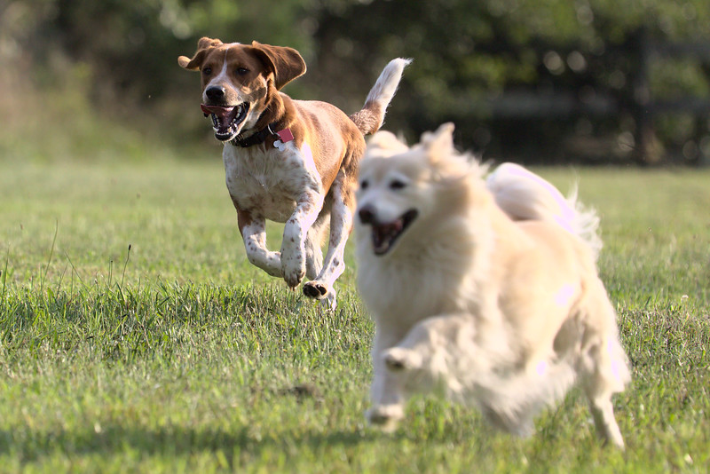 Bader and Haley races across the pasture