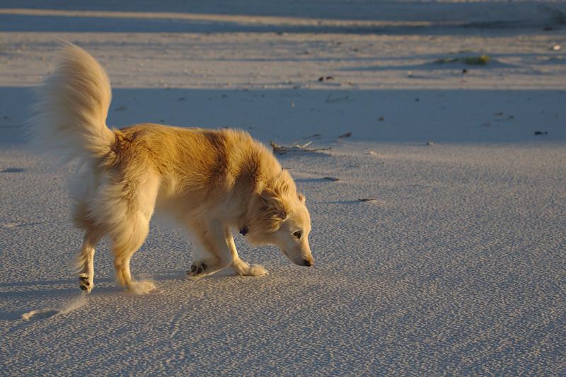 Barrington's morning beach patrol