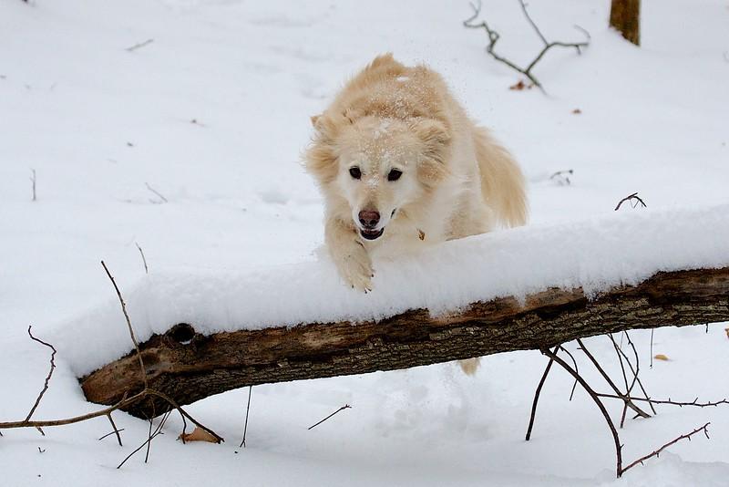 Snow Agility 2