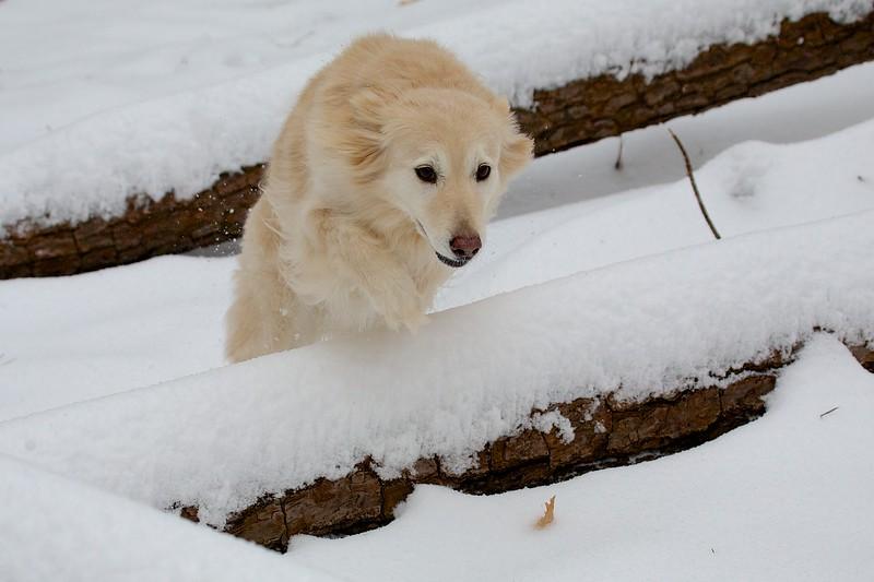 Snow Agility 1