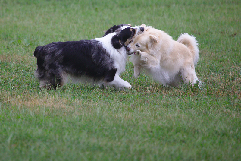 Cole and Haley wrestling in the yard