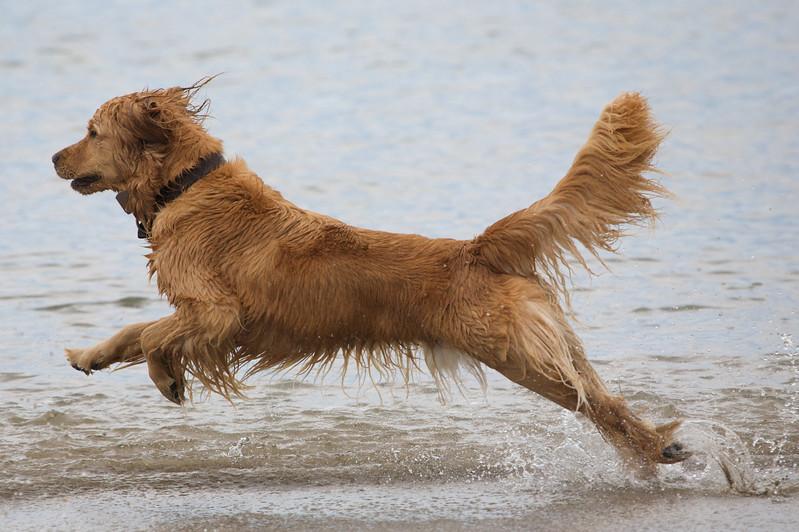 Parker runs along the surf line