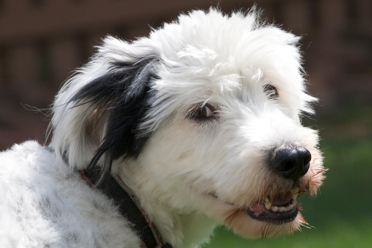 Rufus, June 2009
