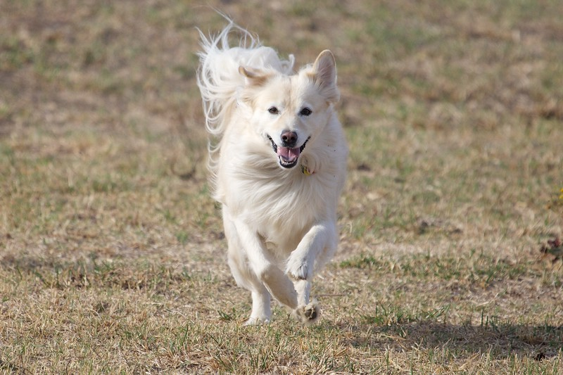 Joyous running