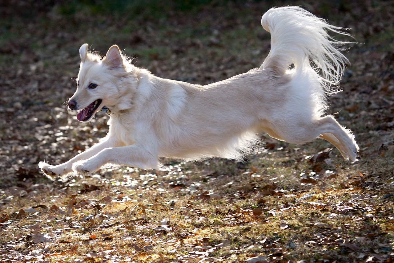 Haley in Flight
