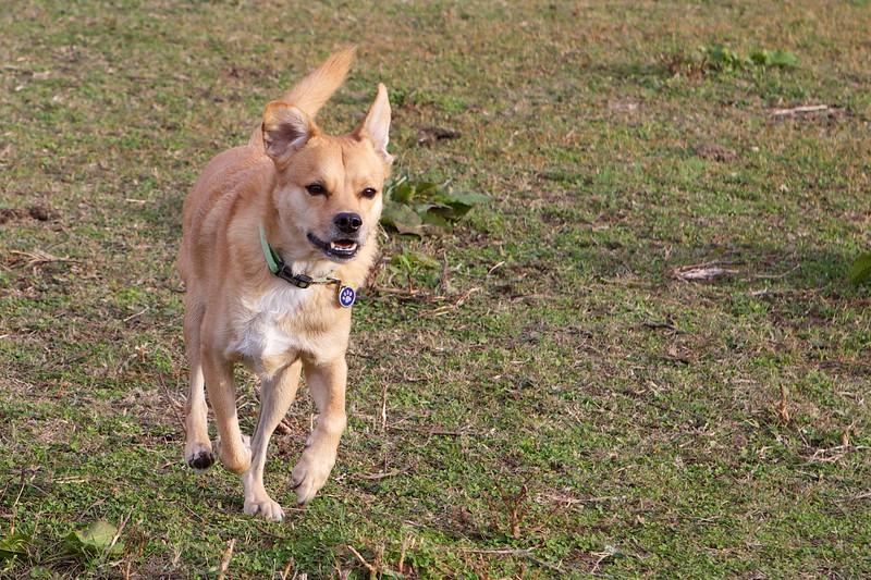 Horton on the run!