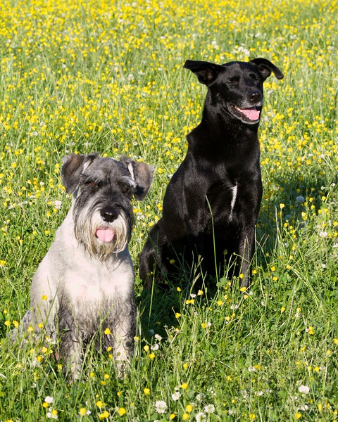 Brady and Reilly; image cropped for standard  (4x5, 8x10, 11x14, 16x20) output.