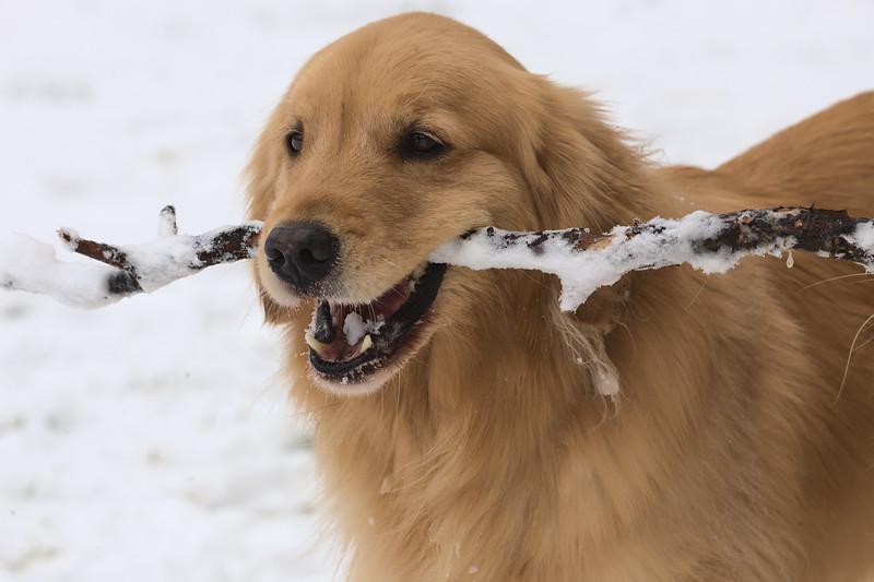 Tiberius in the snow #2