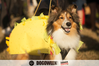 Venice Dog-O-Ween-23