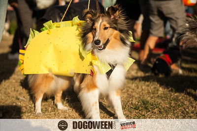 Venice Dog-O-Ween-22