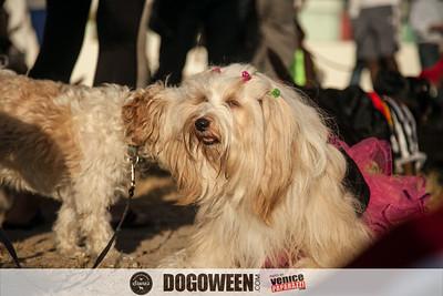 Venice Dog-O-Ween-48