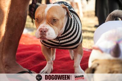 Venice Dog-O-Ween-73