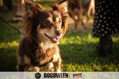Venice Dog-O-Ween-129