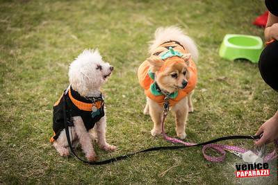 Dogoween.com.  Photos by VenicePaparazzi.com.  Photos sponsored by @BrunosVenice and @ @greengoddesscollective