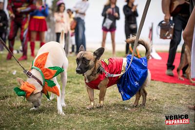 Dogoween.com. Photo by VenicePaparazzi.com