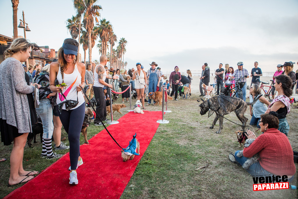 2015 Venice Dog-O-Ween.  #VeniceCAFun #VeniceBeach Photo sponsored by @BrunosVenice. Photo by @VenicePaparazzi