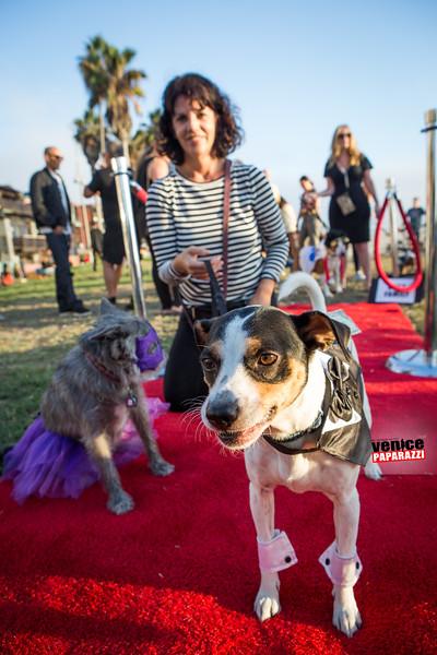 2015 Venice Dog-O-Ween.  #VeniceCAFun #VeniceBeach Photo sponsored by @BrunosVenice. Photo by @VenicePaparazzi
