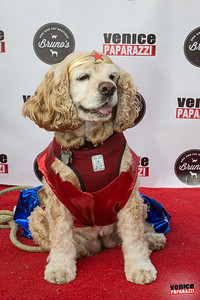 Venice Dog-O-Ween. Photos sponsored by www.BrunosVenice.com.  Red carpet and photos by www.VenicePaparazzi.com.