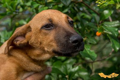 Pups Klein Tuintje