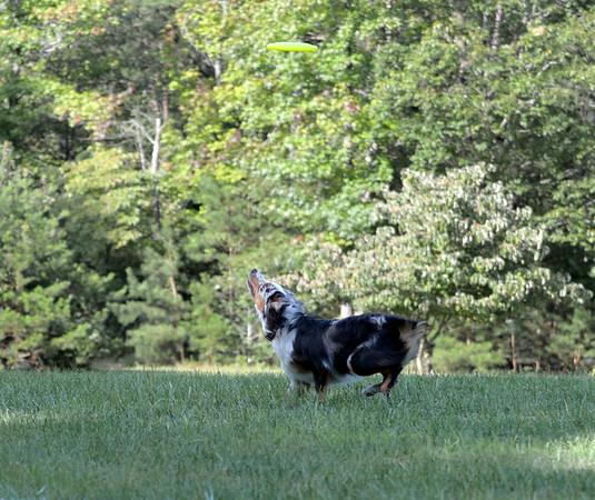 Chesapeake Disc Dogs Club Night, September 09, 2017