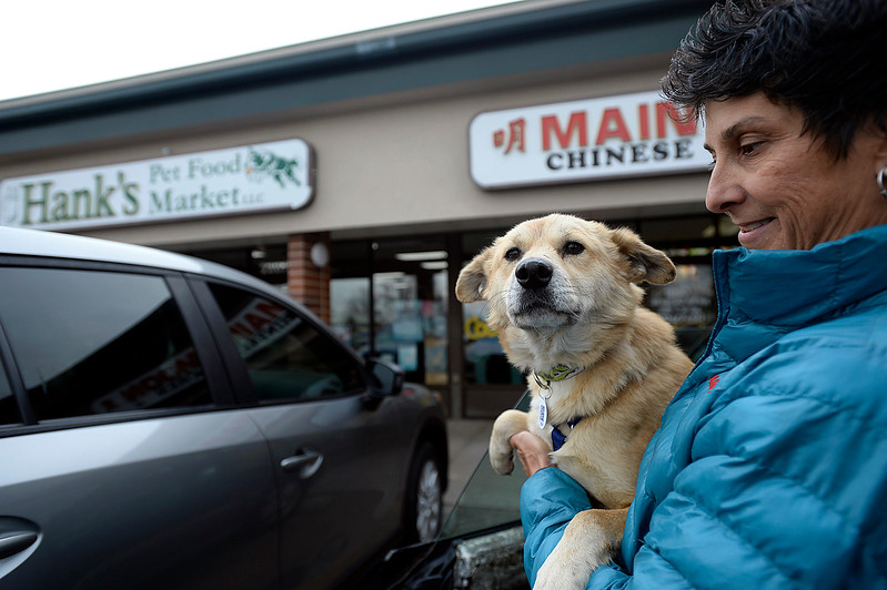 James, a two year-old dog from Nepal, is held by Zoe Katsulos, who runs the Inside/Out Humanitourism Adventures,  on Monday, Nov. 6, 2017, outside Hank's Pet Food Market in Loveland. James is one of 11 dogs who were brought here from Nepal for a better life. Hank's helped with the cost to bring six of the dogs here. (Photo by Jenny Spars/Loveland Reporter-Herald)