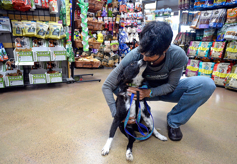 Fozzie, a one year-old dog from Nepal, gives kisses to Zoe Katsulos, who runs the Inside/Out Humanitourism Adventures,  on Monday, Nov. 6, 2017, at Hank's Pet Food Market in Loveland. Fozzie, who is paralyzed from the waist down, is one of 11 dogs who were brought here from Nepal for a better life. Hank's helped with the cost to bring six of the dogs here. Fozzie's foster mom is adopting her. (Photo by Jenny Spars/Loveland Reporter-Herald)