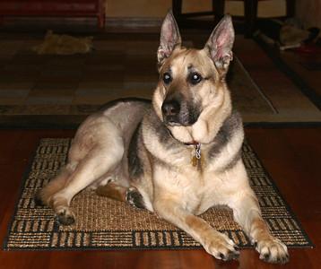 My Dog Cole (1995 -2011)