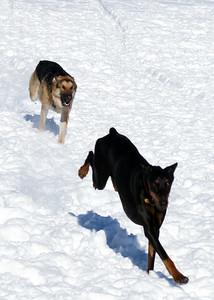 Max at the dog park