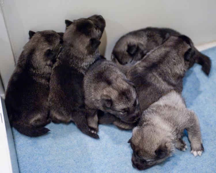 Kyra Puppies -20100609-0005